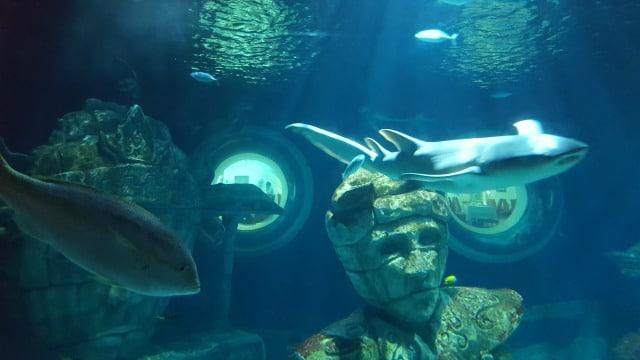 Avis aquarium Sealife 3