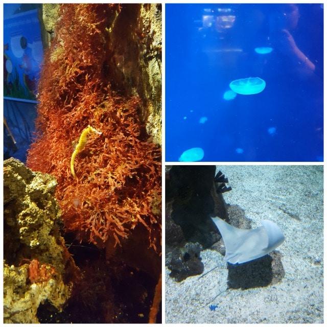 Avis aquarium Sealife 5